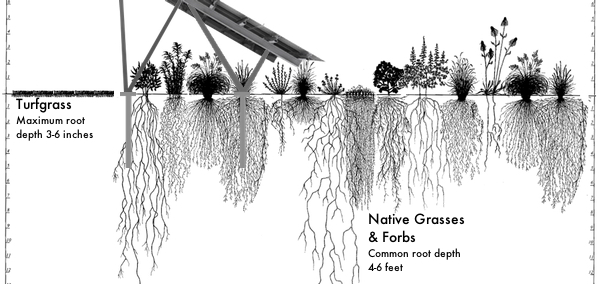 Native Landscaping